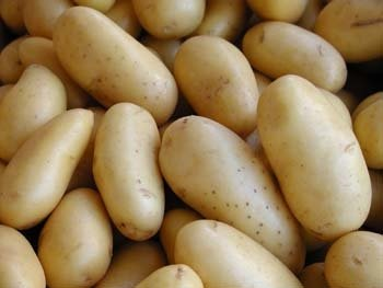 Rules for importing potato seeds  New decision regulating